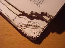 Biopredation rat gnawed pages